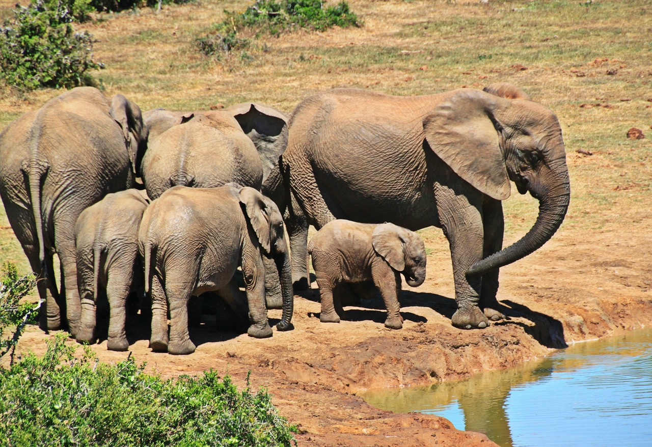 Going on safari is a must if Experiencing South Africa in style is your goal