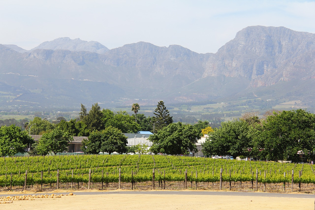 Experiencing South Africa in style is easy when you are sipping wine in Stellenbosch